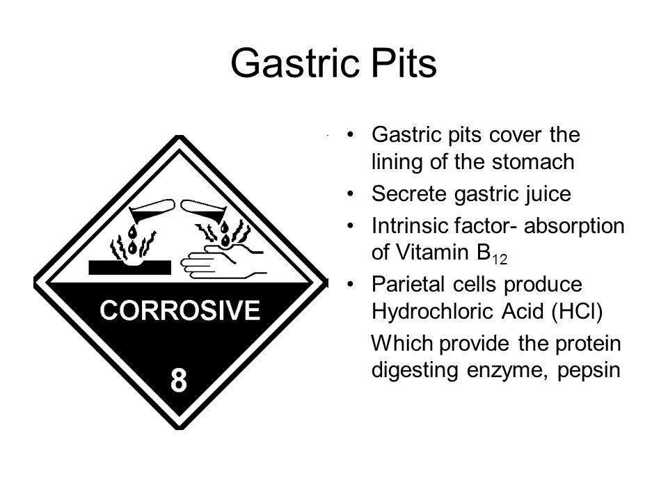 Gastric Pits Gastric pits cover the lining of the stomach Secrete gastric juice Intrinsic factor- absorption of Vitamin B 12 Parietal cells produce Hydrochloric Acid (HCl) Which provide the protein digesting enzyme, pepsin