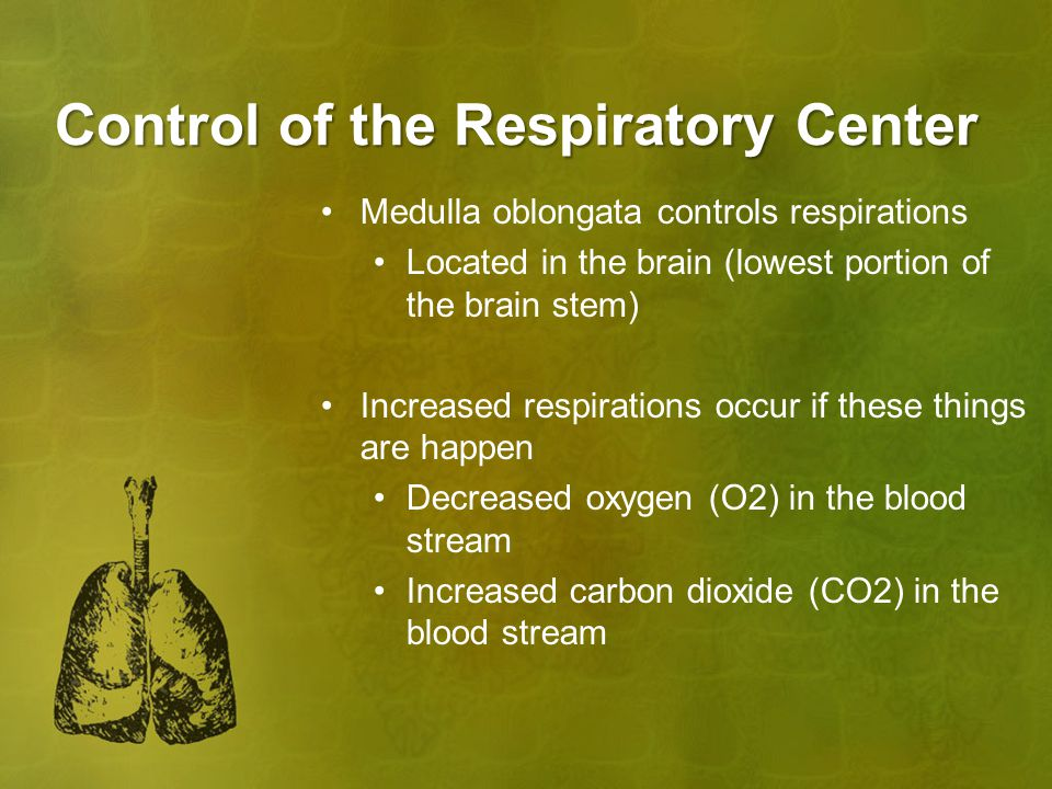 Control of the Respiratory Center Medulla oblongata controls respirations Located in the brain (lowest portion of the brain stem) Increased respirations occur if these things are happen Decreased oxygen (O2) in the blood stream Increased carbon dioxide (CO2) in the blood stream