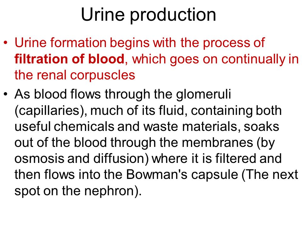 Urine production Urine formation begins with the process of filtration of blood, which goes on continually in the renal corpuscles As blood flows thro