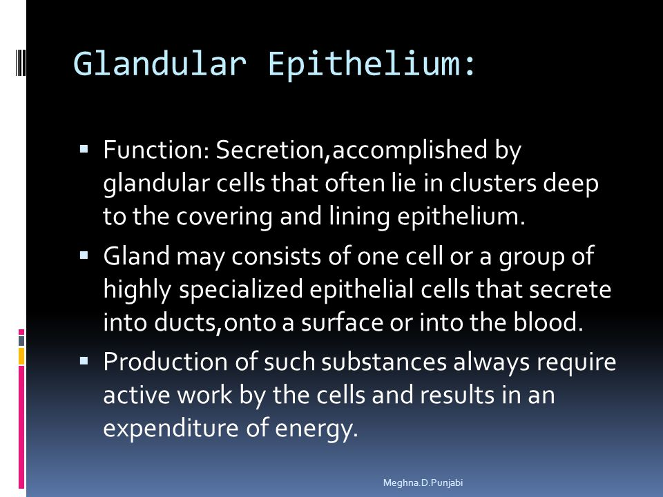Glandular Epithelium:  Function: Secretion,accomplished by glandular cells that often lie in clusters deep to the covering and lining epithelium.