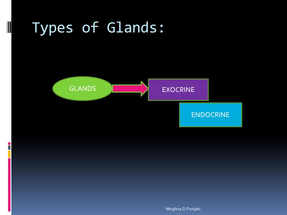 Types of Glands: GLANDS EXOCRINE ENDOCRINE Meghna.D.Punjabi