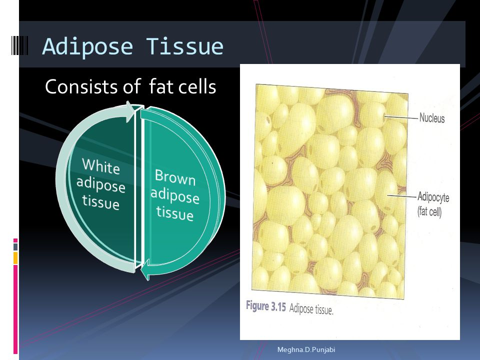 Consists of fat cells Adipose Tissue Meghna.D.Punjabi
