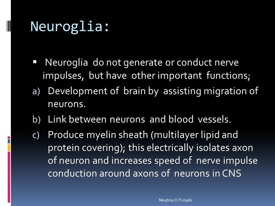 Neuroglia:  Neuroglia do not generate or conduct nerve impulses, but have other important functions; a) Development of brain by assisting migration of neurons.
