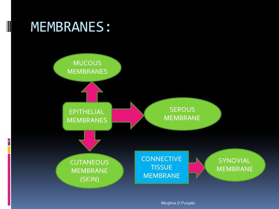 MEMBRANES: Meghna.D.Punjabi EPITHELIAL MEMBRANES SEROUS MEMBRANE MUCOUS MEMBRANES CUTANEOUS MEMBRANE (SKIN) CONNECTIVE TISSUE MEMBRANE SYNOVIAL MEMBRA