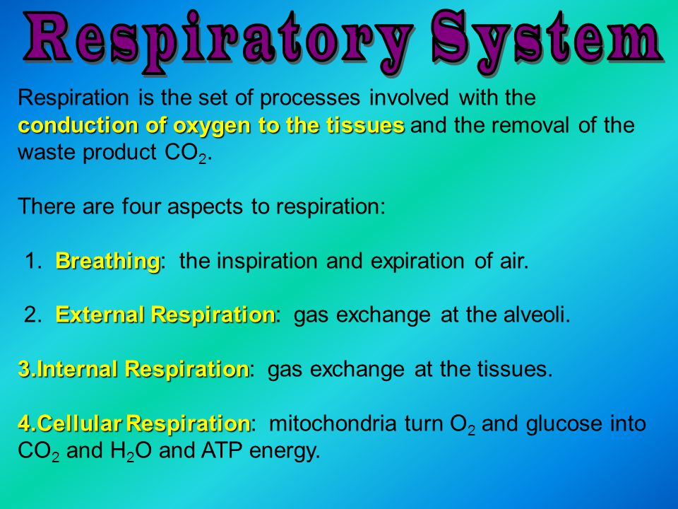 conduction of oxygen to the tissues Respiration is the set of processes involved with the conduction of oxygen to the tissues and the removal of the w