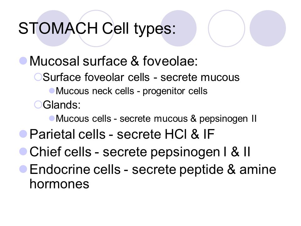 STOMACH Cell types: Mucosal surface & foveolae:  Surface foveolar cells - secrete mucous Mucous neck cells - progenitor cells  Glands: Mucous cells - secrete mucous & pepsinogen II Parietal cells - secrete HCl & IF Chief cells - secrete pepsinogen I & II Endocrine cells - secrete peptide & amine hormones