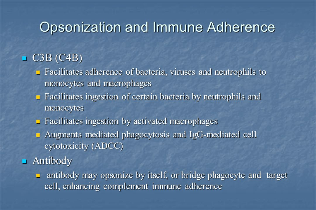 Opsonization and Immune Adherence C3B (C4B) C3B (C4B) Facilitates adherence of bacteria, viruses and neutrophils to monocytes and macrophages Facilitates adherence of bacteria, viruses and neutrophils to monocytes and macrophages Facilitates ingestion of certain bacteria by neutrophils and monocytes Facilitates ingestion of certain bacteria by neutrophils and monocytes Facilitates ingestion by activated macrophages Facilitates ingestion by activated macrophages Augments mediated phagocytosis and IgG-mediated cell cytotoxicity (ADCC) Augments mediated phagocytosis and IgG-mediated cell cytotoxicity (ADCC) Antibody Antibody antibody may opsonize by itself, or bridge phagocyte and target cell, enhancing complement immune adherence antibody may opsonize by itself, or bridge phagocyte and target cell, enhancing complement immune adherence