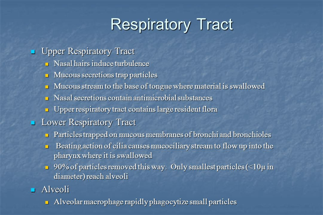 Respiratory Tract Upper Respiratory Tract Upper Respiratory Tract Nasal hairs induce turbulence Nasal hairs induce turbulence Mucous secretions trap particles Mucous secretions trap particles Mucous stream to the base of tongue where material is swallowed Mucous stream to the base of tongue where material is swallowed Nasal secretions contain antimicrobial substances Nasal secretions contain antimicrobial substances Upper respiratory tract contains large resident flora Upper respiratory tract contains large resident flora Lower Respiratory Tract Lower Respiratory Tract Particles trapped on mucous membranes of bronchi and bronchioles Particles trapped on mucous membranes of bronchi and bronchioles Beating action of cilia causes mucociliary stream to flow up into the pharynx where it is swallowed Beating action of cilia causes mucociliary stream to flow up into the pharynx where it is swallowed 90% of particles removed this way.