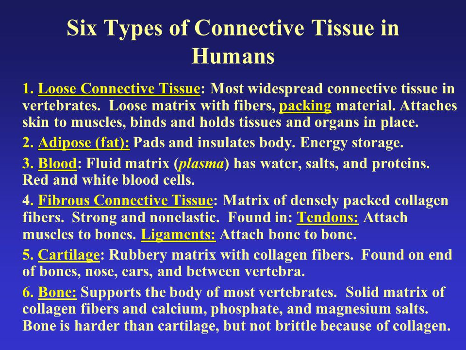 Six Types of Connective Tissue in Humans 1.
