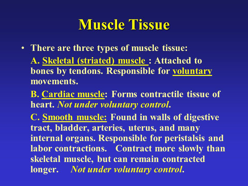 Muscle Tissue There are three types of muscle tissue: A.