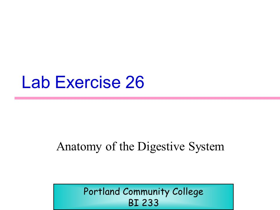 Lab Exercise 26 Anatomy of the Digestive System Portland Community College BI 233