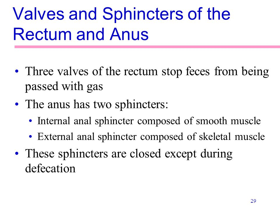 29 Valves and Sphincters of the Rectum and Anus Three valves of the rectum stop feces from being passed with gas The anus has two sphincters: Internal