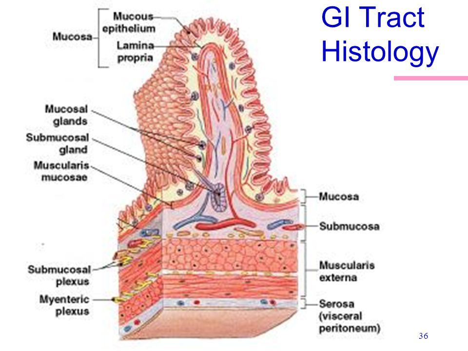 36 GI Tract Histology
