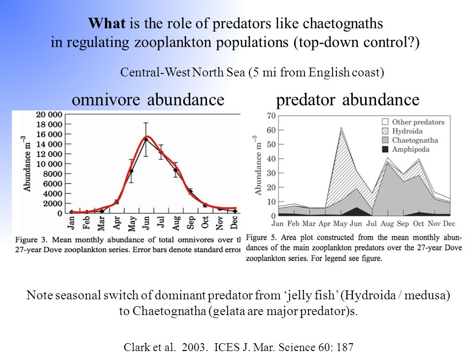 What is the role of predators like chaetognaths in regulating zooplankton populations (top-down control?) Central-West North Sea (5 mi from English co