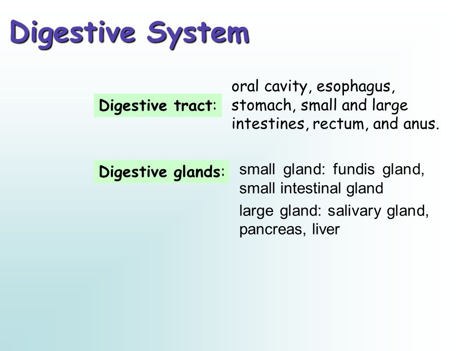Digestive glands: Digestive System oral cavity, esophagus, stomach, small and large intestines, rectum, and anus. small gland: fundis gland, small int