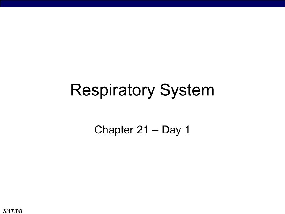 3/17/08 Respiratory System Chapter 21 – Day 1