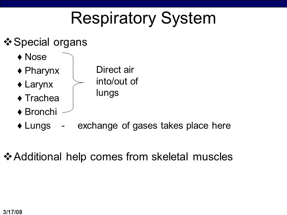 3/17/08 Process of Respiration  Physical movement of air ♦= External Respiration  Use of O 2 in cells for metabolism ♦= Internal/Cellular respiration