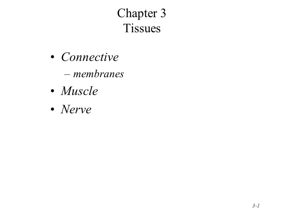 3-1 Chapter 3 Tissues Connective –membranes Muscle Nerve