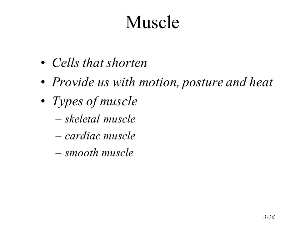 3-26 Muscle Cells that shorten Provide us with motion, posture and heat Types of muscle –skeletal muscle –cardiac muscle –smooth muscle