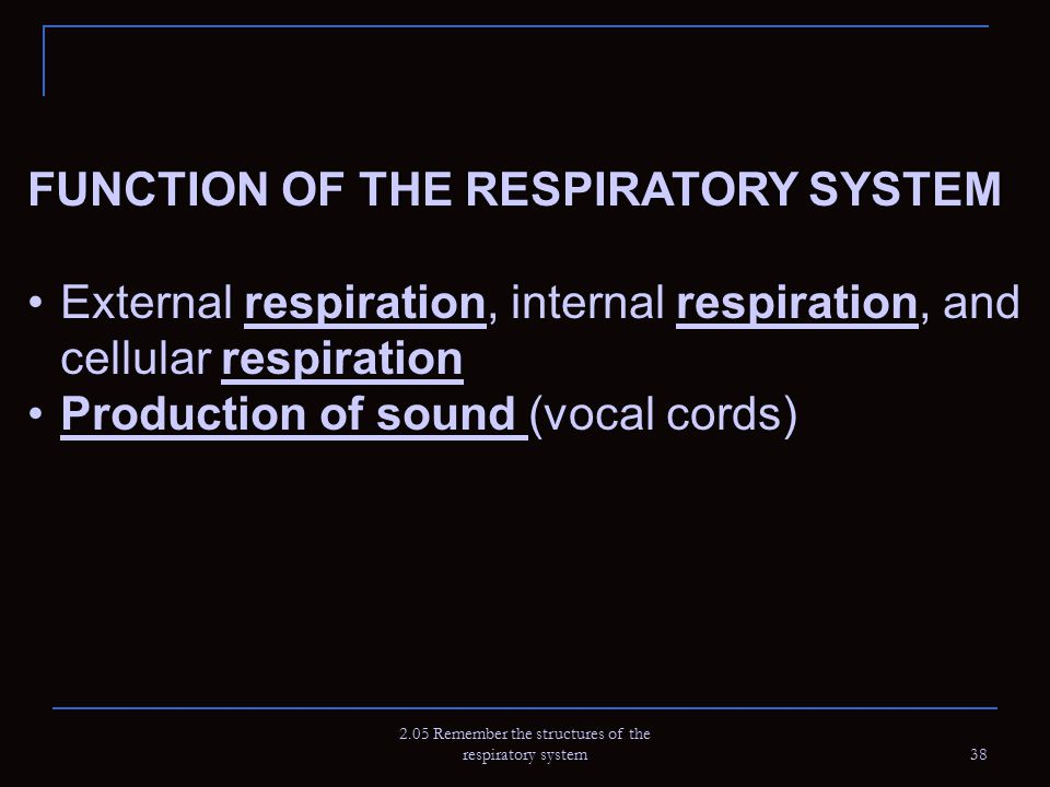 2.05 Remember the structures of the respiratory system 38 FUNCTION OF THE RESPIRATORY SYSTEMFUNCTION OF THE RESPIRATORY SYSTEM External respiration, i