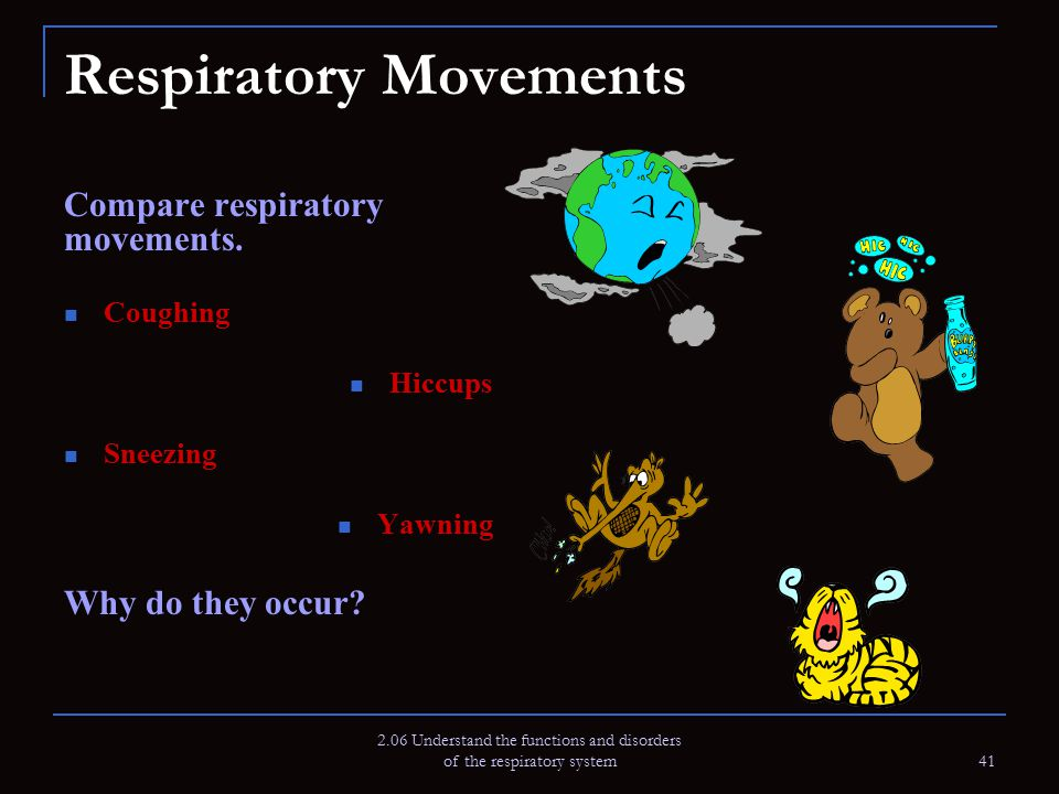 2.06 Understand the functions and disorders of the respiratory system 41 Respiratory Movements Compare respiratory movements. Coughing Hiccups Sneezin