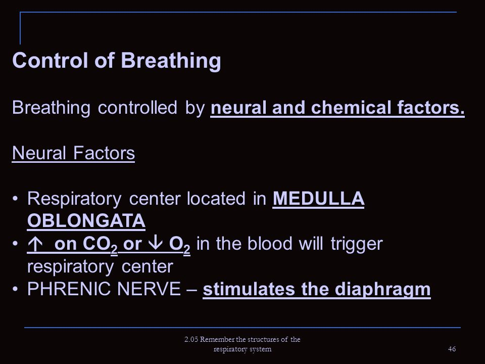 2.05 Remember the structures of the respiratory system 46 Control of Breathing Breathing controlled by neural and chemical factors. Neural Factors Res