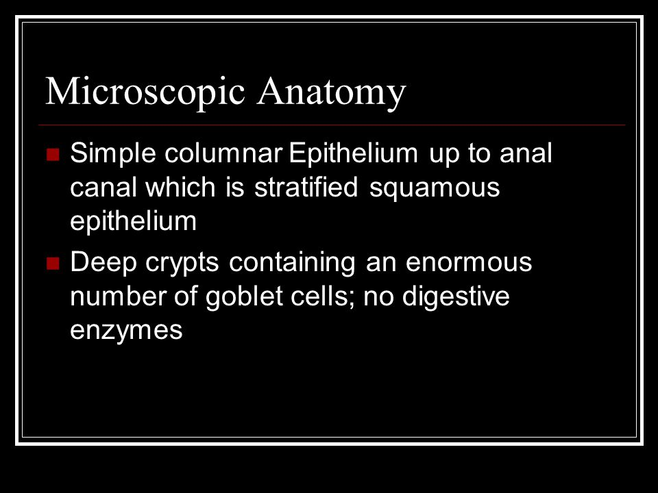 Microscopic Anatomy Simple columnar Epithelium up to anal canal which is stratified squamous epithelium Deep crypts containing an enormous number of goblet cells; no digestive enzymes
