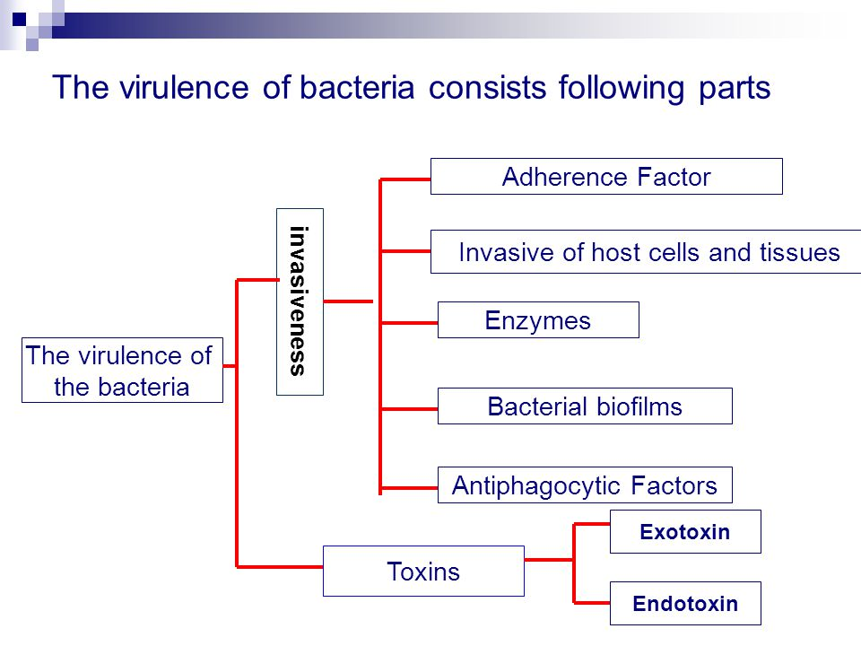 The virulence of bacteria consists following parts The virulence of the bacteria Adherence Factor Invasive of host cells and tissues Toxins Endotoxin Exotoxin Enzymes Antiphagocytic Factors Bacterial biofilms invasiveness
