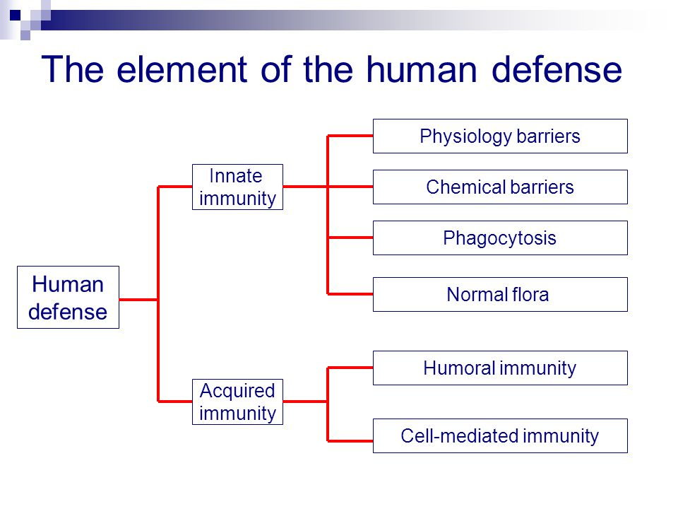 The element of the human defense Human defense Innate immunity Acquired immunity Physiology barriers Normal flora Phagocytosis Humoral immunity Cell-mediated immunity Chemical barriers