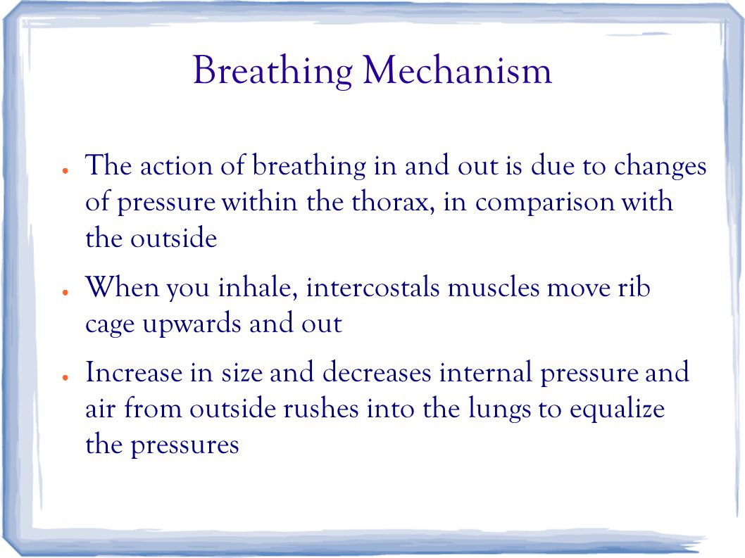 Breathing Mechanism ● The action of breathing in and out is due to changes of pressure within the thorax, in comparison with the outside ● When you inhale, intercostals muscles move rib cage upwards and out ● Increase in size and decreases internal pressure and air from outside rushes into the lungs to equalize the pressures