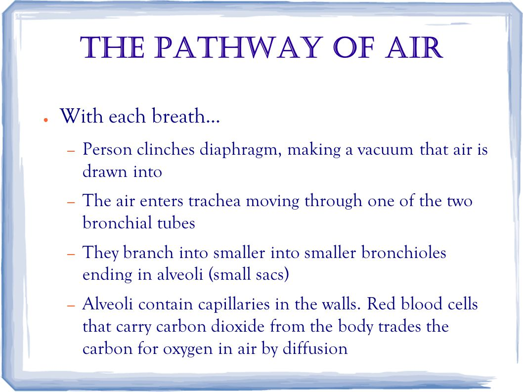 The Pathway of air ● With each breath...