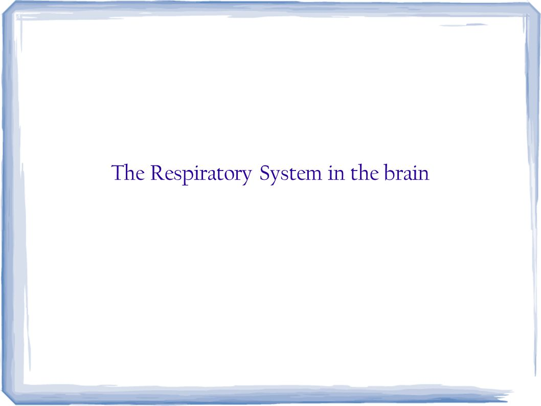 The Respiratory System in the brain