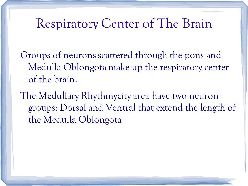 Respiratory Center of The Brain Groups of neurons scattered through the pons and Medulla Oblongota make up the respiratory center of the brain.