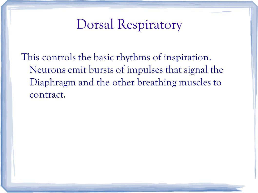 Dorsal Respiratory This controls the basic rhythms of inspiration. Neurons emit bursts of impulses that signal the Diaphragm and the other breathing m