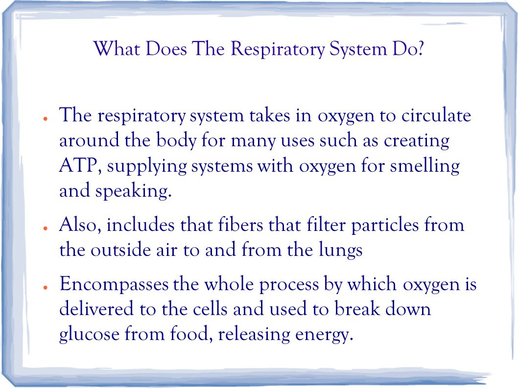 What Does The Respiratory System Do? ● The respiratory system takes in oxygen to circulate around the body for many uses such as creating ATP, supplyi