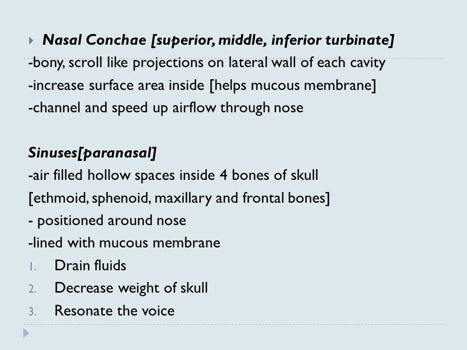  Nasal Conchae [superior, middle, inferior turbinate] -bony, scroll like projections on lateral wall of each cavity -increase surface area inside [helps mucous membrane] -channel and speed up airflow through nose Sinuses[paranasal] -air filled hollow spaces inside 4 bones of skull [ethmoid, sphenoid, maxillary and frontal bones] - positioned around nose -lined with mucous membrane 1.