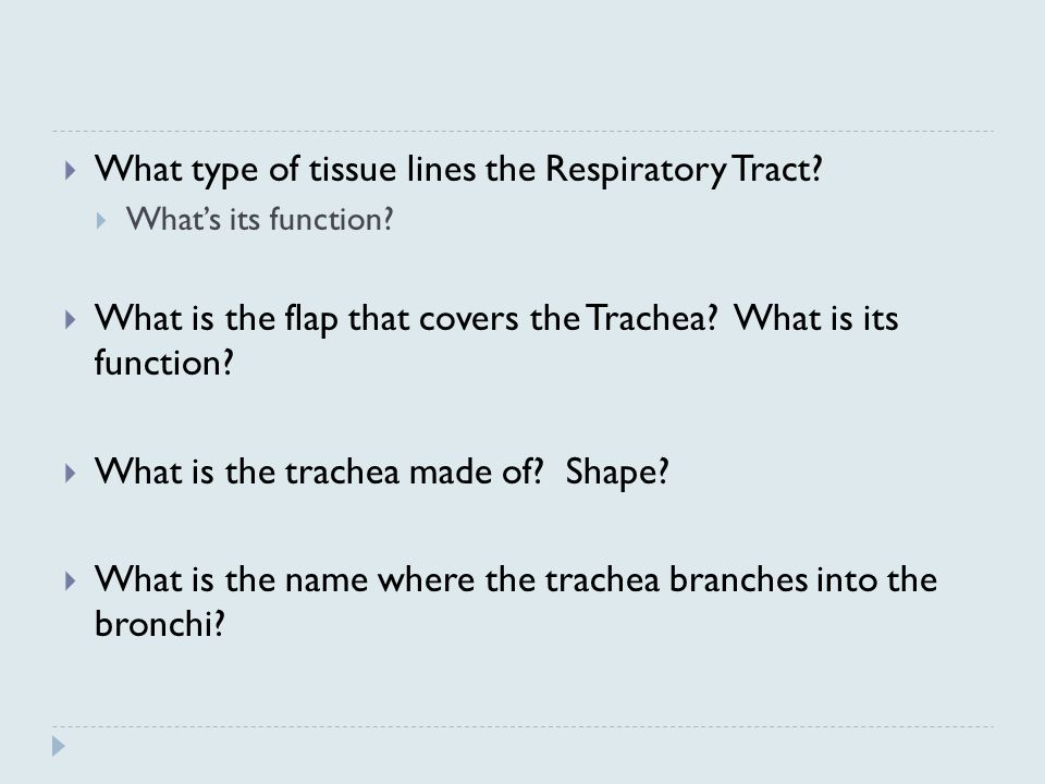  What type of tissue lines the Respiratory Tract.