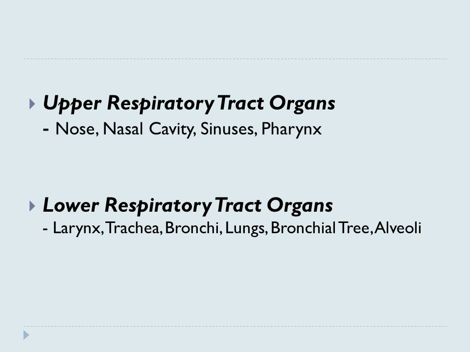  Upper Respiratory Tract Organs - Nose, Nasal Cavity, Sinuses, Pharynx  Lower Respiratory Tract Organs - Larynx, Trachea, Bronchi, Lungs, Bronchial Tree, Alveoli