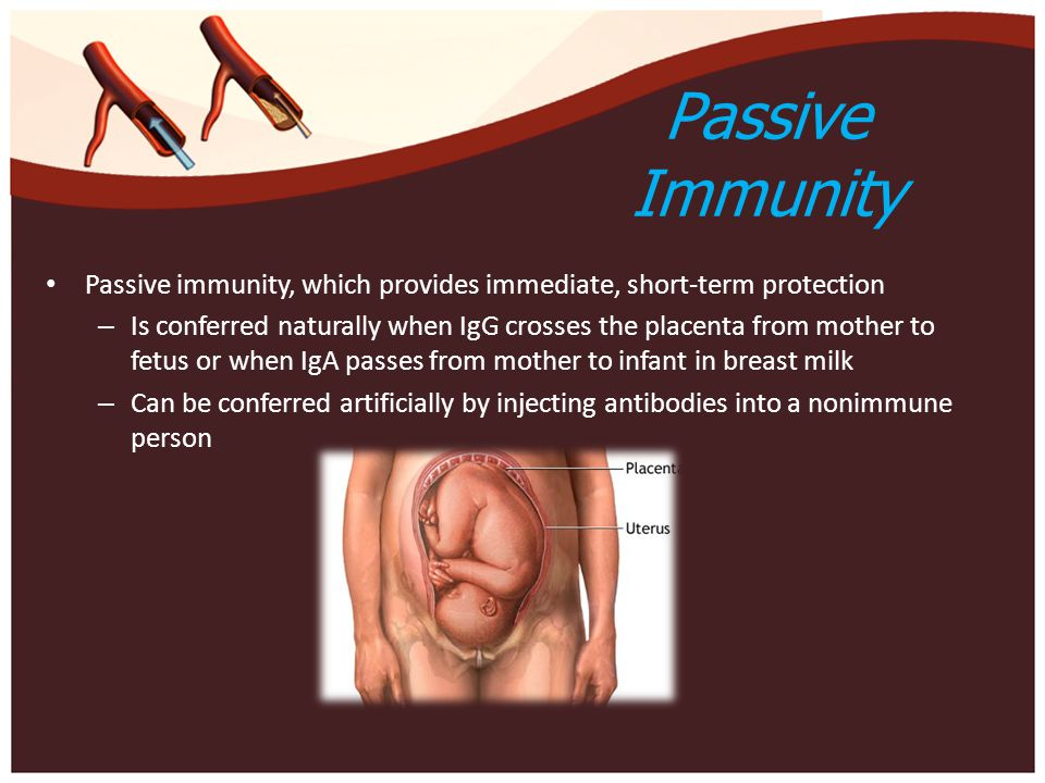Passive Immunity Passive immunity, which provides immediate, short-term protection – Is conferred naturally when IgG crosses the placenta from mother to fetus or when IgA passes from mother to infant in breast milk – Can be conferred artificially by injecting antibodies into a nonimmune person