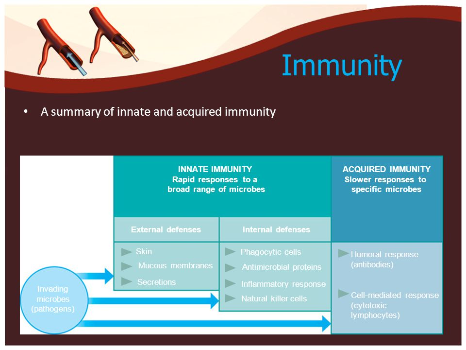 Immunity A summary of innate and acquired immunity INNATE IMMUNITY Rapid responses to a broad range of microbes ACQUIRED IMMUNITY Slower responses to