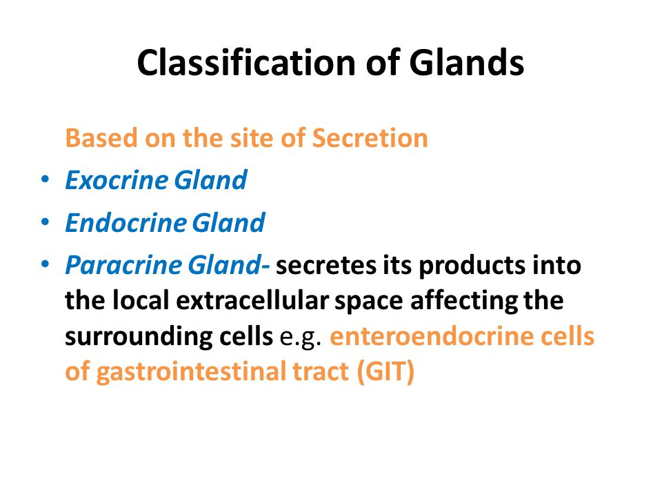 Classification of Glands Based on the site of Secretion Exocrine Gland Endocrine Gland Paracrine Gland- secretes its products into the local extracellular space affecting the surrounding cells e.g.