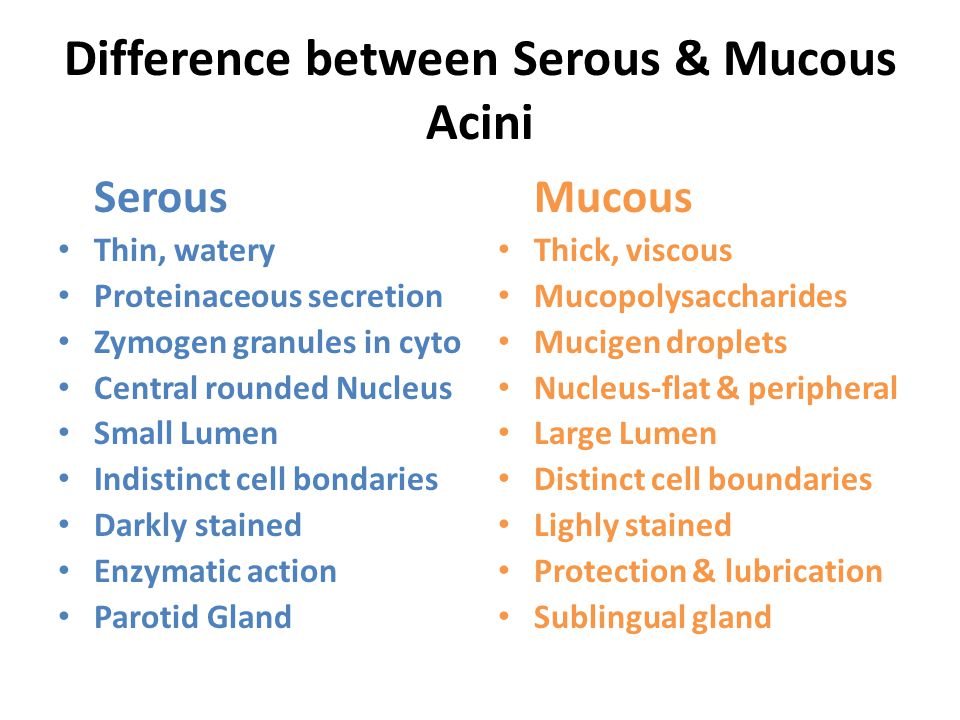 Difference between Serous & Mucous Acini Serous Thin, watery Proteinaceous secretion Zymogen granules in cyto Central rounded Nucleus Small Lumen Indistinct cell bondaries Darkly stained Enzymatic action Parotid Gland Mucous Thick, viscous Mucopolysaccharides Mucigen droplets Nucleus-flat & peripheral Large Lumen Distinct cell boundaries Lighly stained Protection & lubrication Sublingual gland