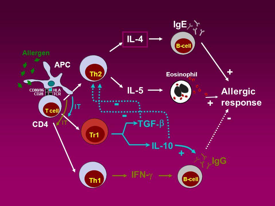 APC IgE IL-4 IL-5 Allergic response Eosinophil Th2 B-cell + + Tr1 IL-10 TGF -  - - + IT Th1 IgG IFN-  B-cell IT - CD4 CD80/86 T cell Allergen TCR HLA CD28