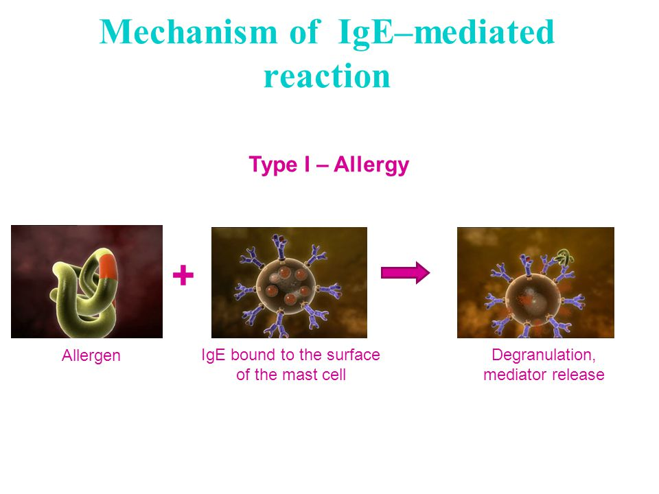 Mechanism of IgE–mediated reaction Type I – Allergy Allergen IgE bound to the surface of the mast cell Degranulation, mediator release +