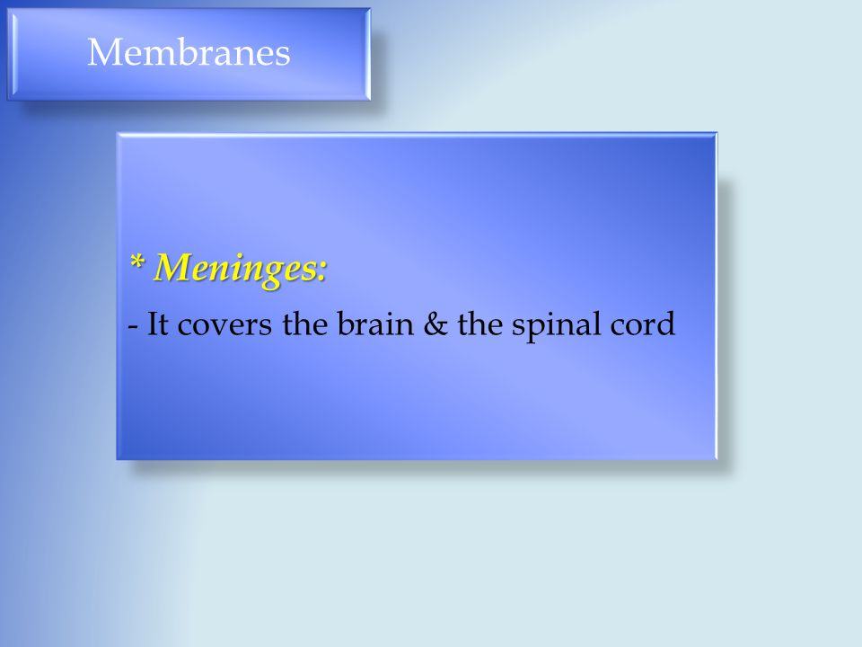 Membranes * Meninges: - It covers the brain & the spinal cord