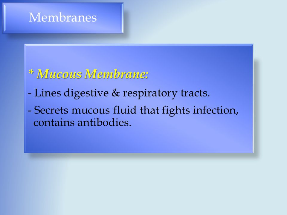 Membranes * Mucous Membrane: - Lines digestive & respiratory tracts. - Secrets mucous fluid that fights infection, contains antibodies.