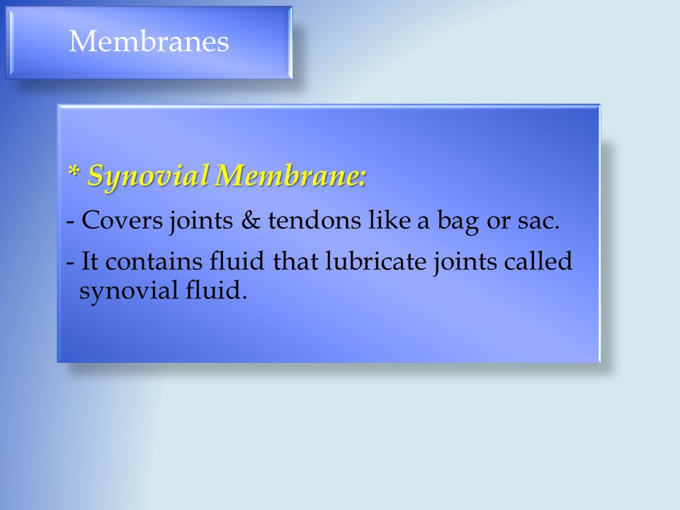Membranes * Synovial Membrane: - Covers joints & tendons like a bag or sac.