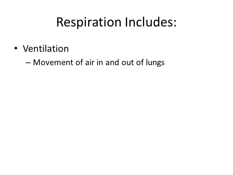 Respiration Includes: Ventilation – Movement of air in and out of lungs