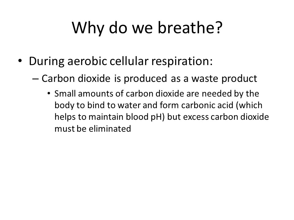 Why do we breathe? During aerobic cellular respiration: – Carbon dioxide is produced as a waste product Small amounts of carbon dioxide are needed by