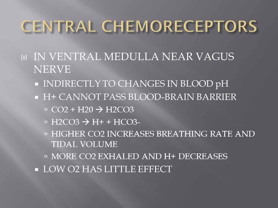  IN VENTRAL MEDULLA NEAR VAGUS NERVE  INDIRECTLY TO CHANGES IN BLOOD pH  H+ CANNOT PASS BLOOD-BRAIN BARRIER  CO2 + H20  H2CO3  H2CO3  H+ + HCO3